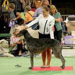 Mit Ailean (Deerhound) im Ring, Kreuzlingen CH 2016