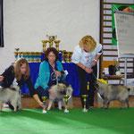 Mit Josie Posie (Wolfsspitz) im Ring (1.Platz!!!), Wangen an der Aare CH 2014