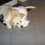 Syra und Lilli