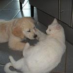 Syra 10 Wochen und Lilli