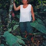 Venezuela-Brasilien | Ingrid G. und Kakaobaum mit Kakaofrüchten