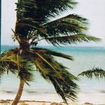 Trinidad & Tobago | Orkan