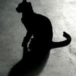 Recife, Katze, 2008 oder 2009 - vou ver...