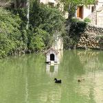 Santuario de la Misericordia (estanque)
