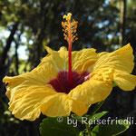 Blumenpracht im Hasta la Pasta