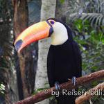 Im Vogelpark bei Foz de Iguazu
