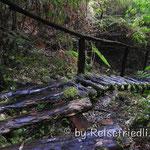 Wanderung im Regenwald
