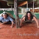 Riesenschildkröten :-)