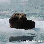 Otter mit Baby