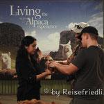 Alpaca Mundo in Arecipa