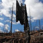 Waldbrand im Jasper Nationalpark