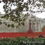 """888246 """"ceramic poppies"""" welche an die Gefallenen des 1. Weltkrieges erinnern"""
