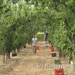 Früchteplantage Frutta Roja in Mendoza