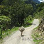 Pass über die Anden