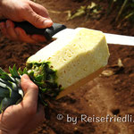Frische Ananas vom Feld