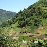 Landwirtschaft in Guatemala