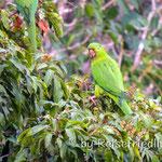 In der papagaienschlucht