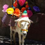 Esel im touristischen San Miguel de Allende