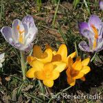 Frühling in der Schweiz