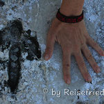 Spuren im Chaco