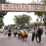 Langhornrinder und Cowboys in Fort Worth
