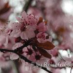 Frühling in Esquel