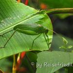 Insekt auf der Nicoya-Halbinsel