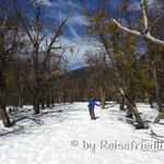Schnee im Parque Nahuel Huapi