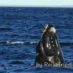 Aug in Aug mit den Walen