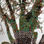Der Osterbaum in Pomerode