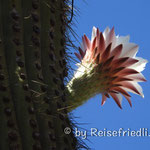 Kaktus auf der Ruta 40