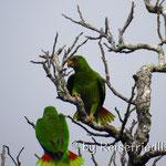 Papageien an unserem Übernachtungsplatz