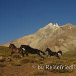Pferde im Valle Hermoso
