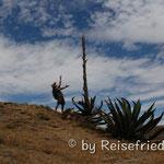 Beat und der Kaktus