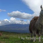 Chimborazo von unserem Übernachtungsplatz