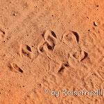 Tapir-Spuren