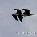 Zugvögel unsere Begleiter