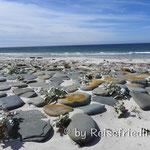 Sealion-Insel auf Falkland