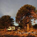 Übernachtungsplatz unter Araukarien