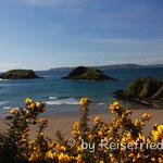 Frühlingsstimmung auf der Insel