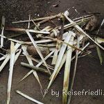Abfall der Palmherzproduktion