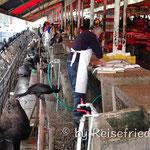 Am Fischmarkt in Valdivia