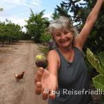 Führung durch die Frutta Roja Plantagein Mendoza