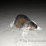 Schildkröte bei Nacht