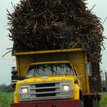 Zuckerrahr transport