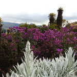 Farbenpracht auf dem Andenpass