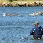 Fischer bei Laguans fischen mit Hilfe von Delfinen