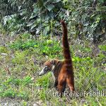 Begegnung im Dschungel