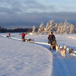 Schlittenhundetour in Lappland
