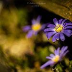 Frühling hinter dem Zaun